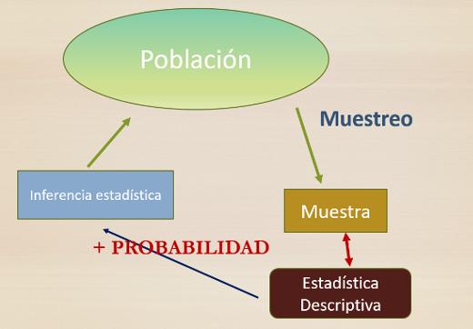 2 2 Proceso Científico Del Análisis Estadístico Estadística Básica Edulcorada